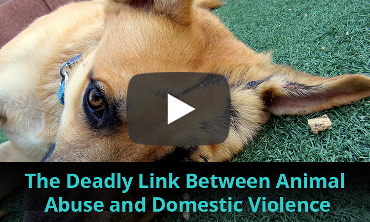 Domestic Violence Awareness Month Video